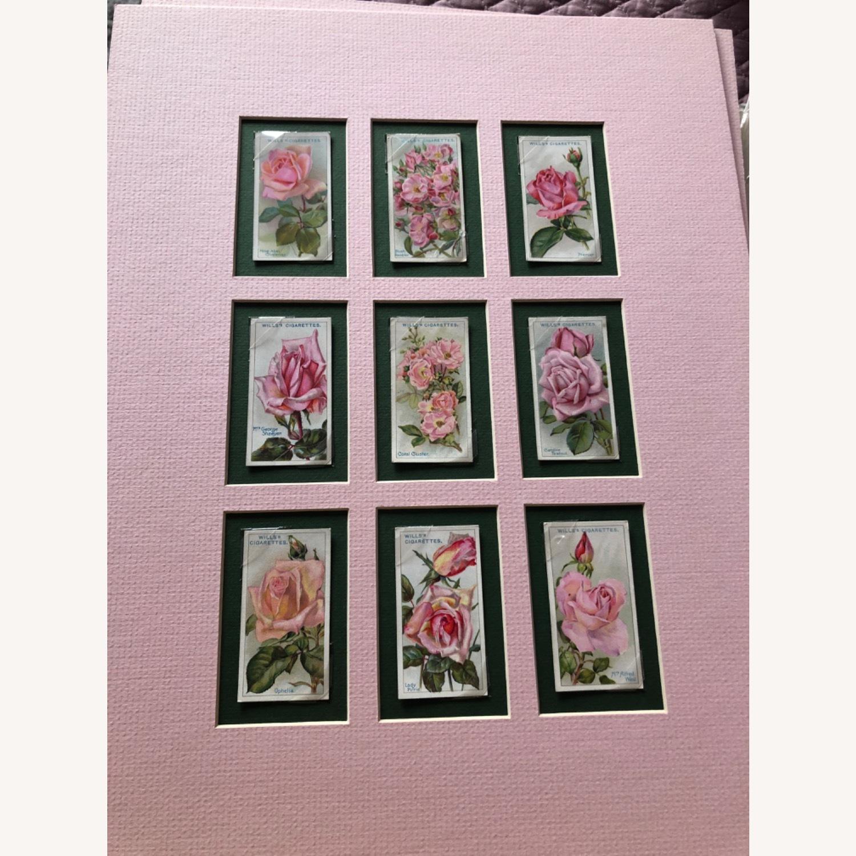 1912 Cigarette Cards Roses - image-7