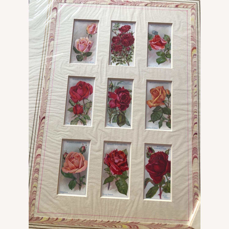 1912 Cigarette Cards Roses - image-6