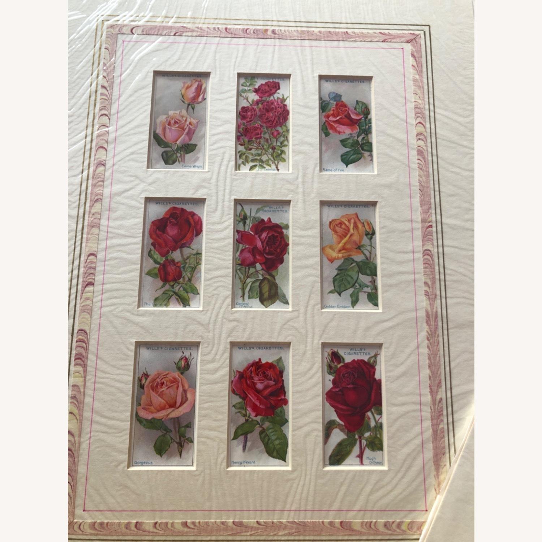 1912 Cigarette Cards Roses - image-4