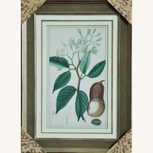 Used Plats Prints with Wood Framed for sale on AptDeco