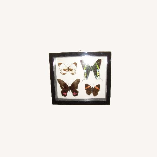 Used 4 Butterflies from Peru for sale on AptDeco