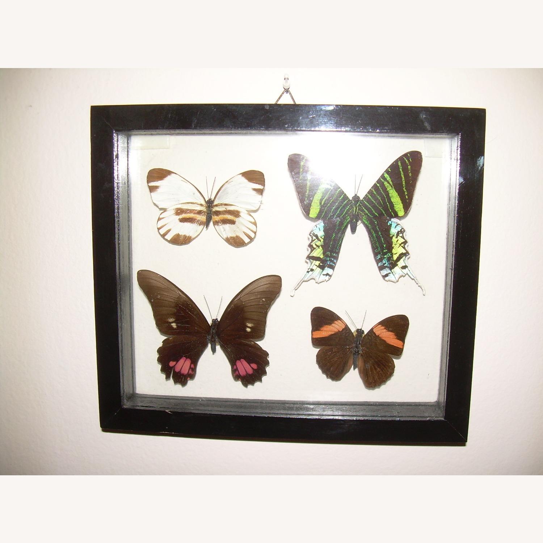 4 Butterflies from Peru - image-1
