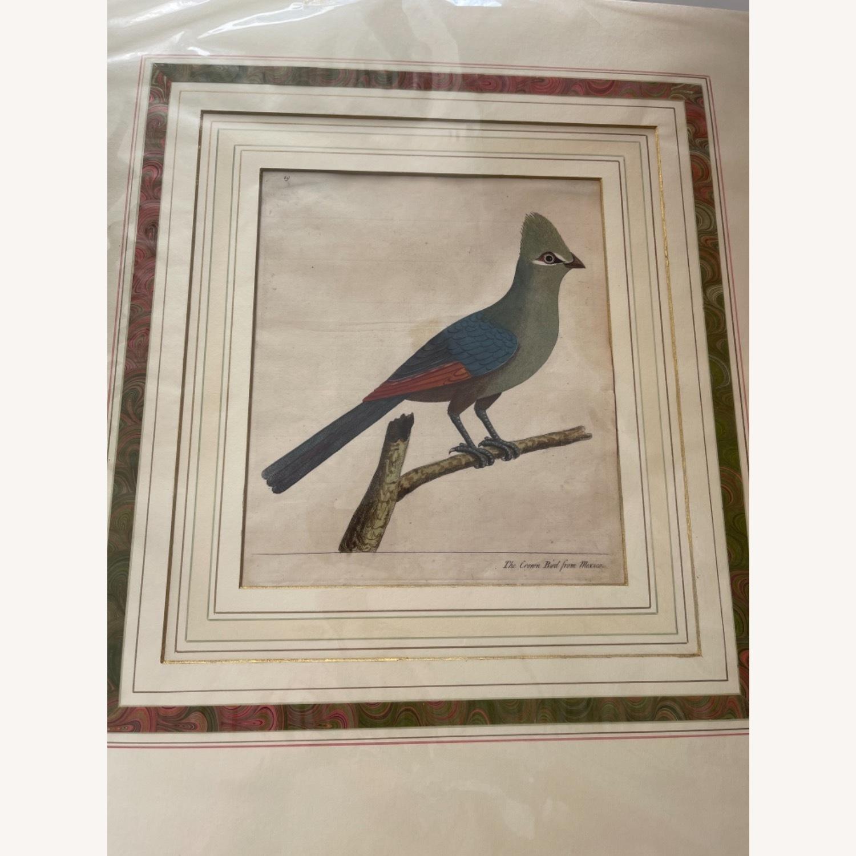 Mexican Crown Bird Print - image-1