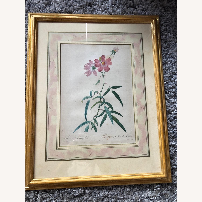 Pair Framed Redoute Engravings - image-5