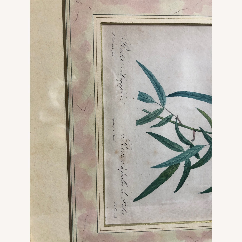 Pair Framed Redoute Engravings - image-4