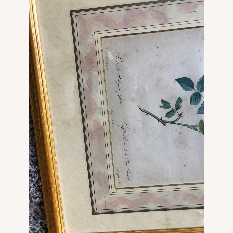 Pair Framed Redoute Engravings - image-3