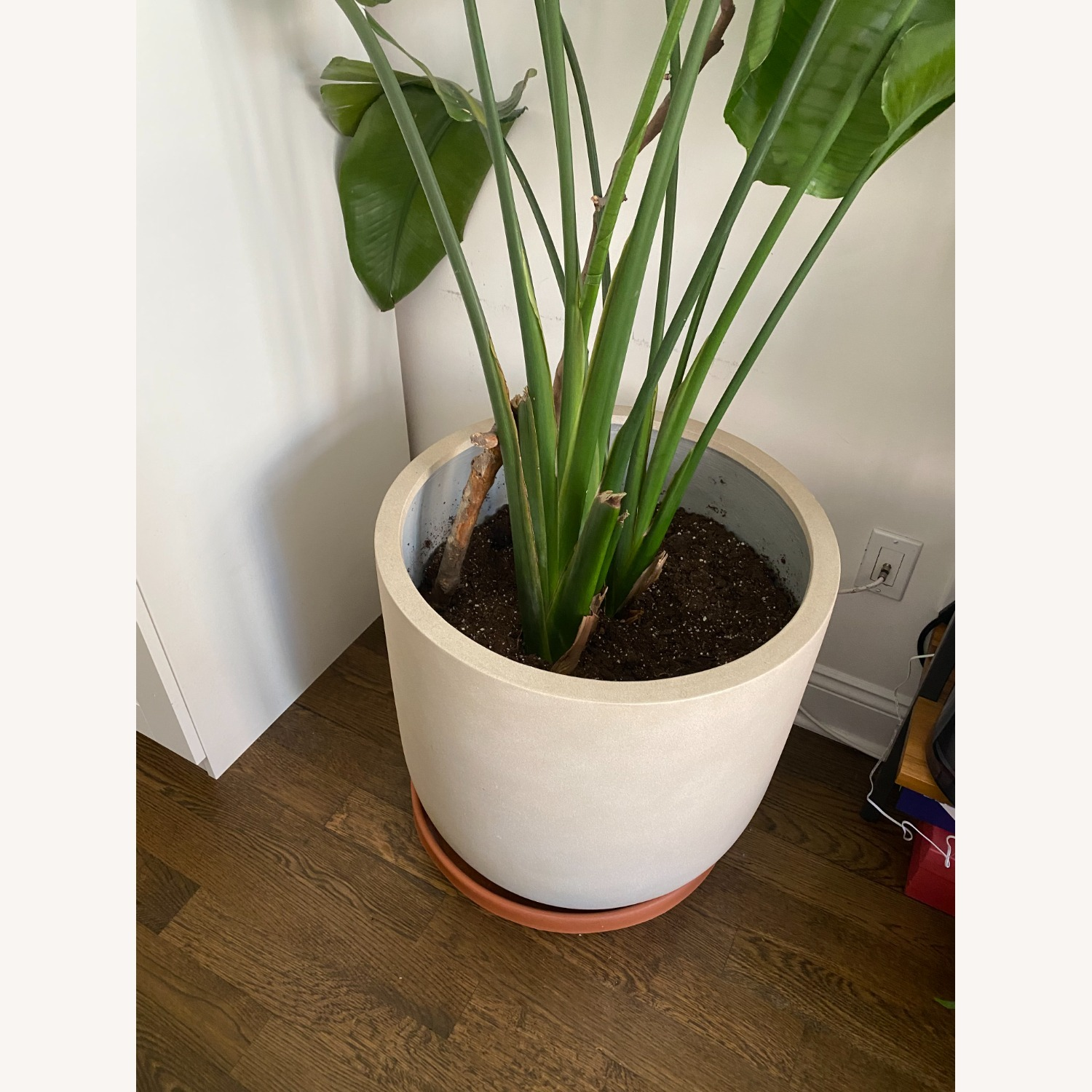 West Elm Radius Planter Extra Large - image-4
