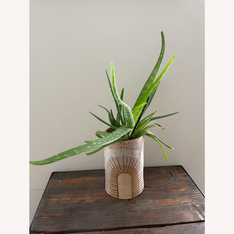 Handmade Curious Clay Rainbow Planter & Plate - image-3