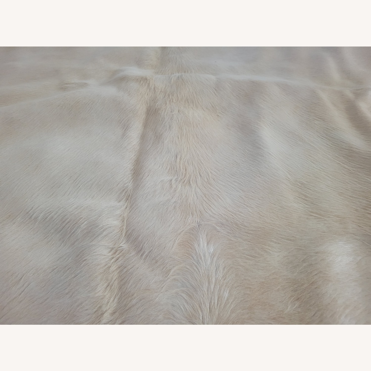 Real Ivory Argentinian Cowhide Rug - image-2