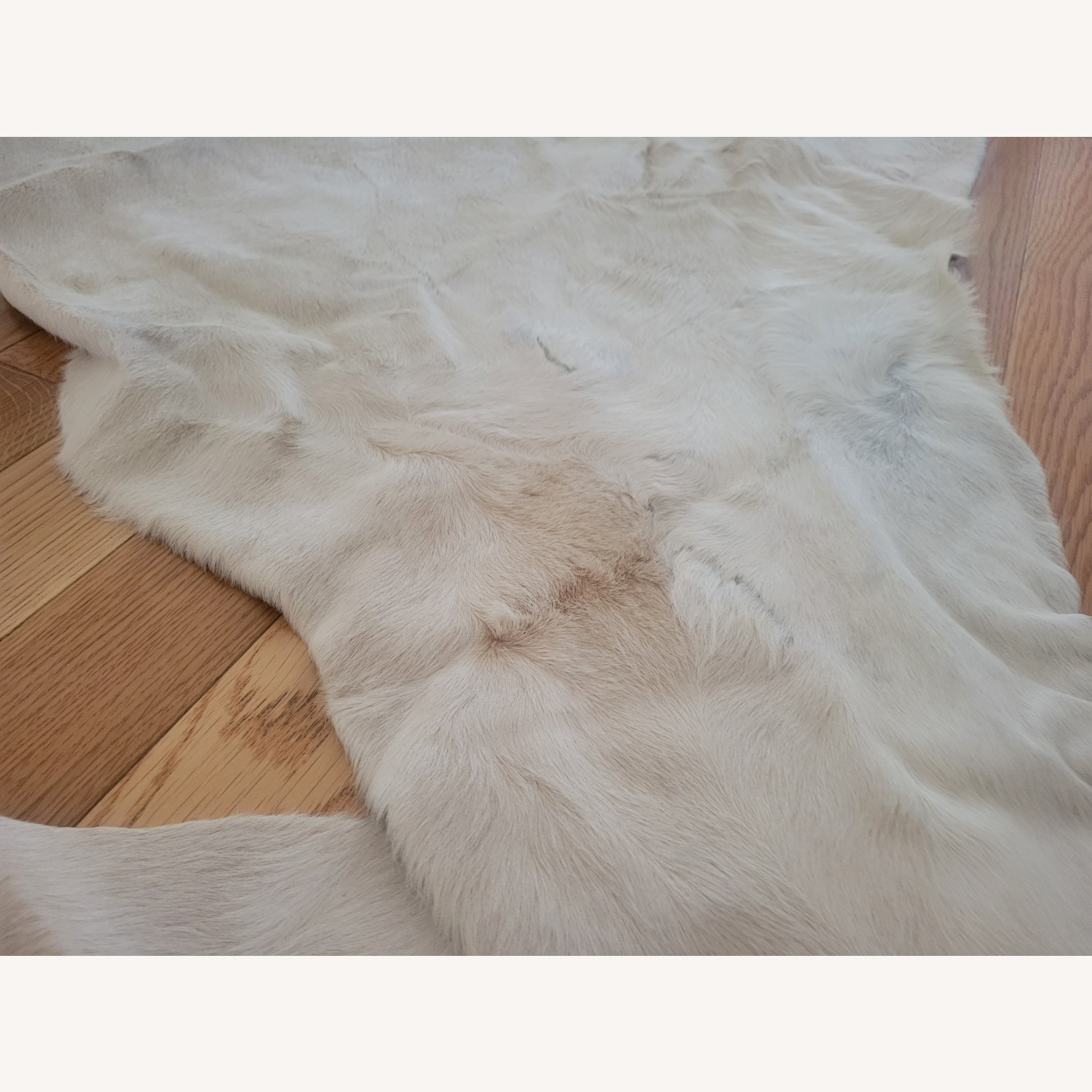 Real Ivory Argentinian Cowhide Rug - image-5