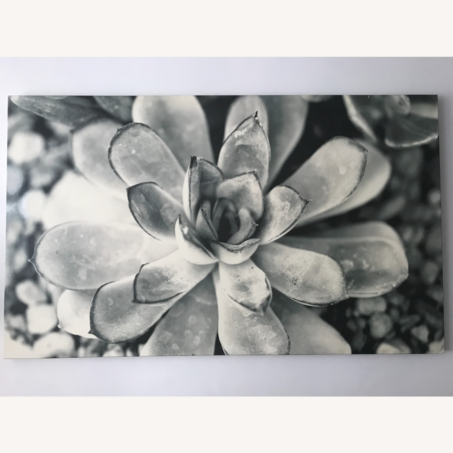 Black and White Floral Photography Succulent Art - image-1