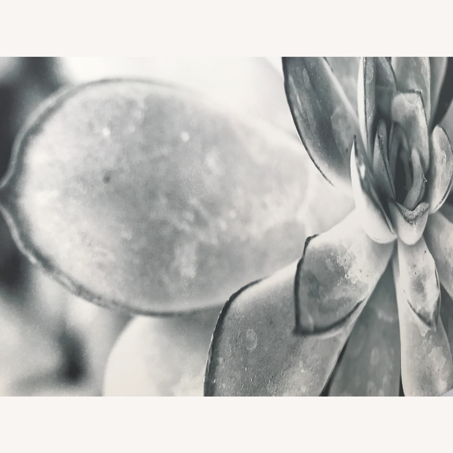 Black and White Floral Photography Succulent Art - image-2