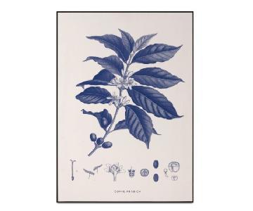 BoConcept Coffee Arabica